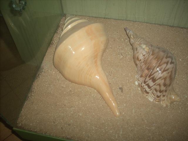 Dscn7156